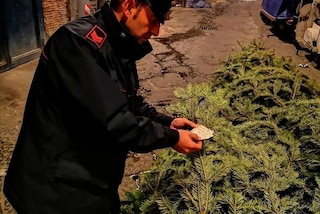 Napoli, ritrovato ai Quartieri Spagnoli l'albero di Natale rubato in Galleria Umberto