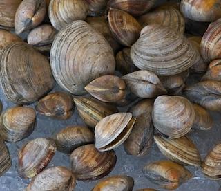 Vongole tossiche pescate nella melma della Foce del Sarno: scatta il sequestro