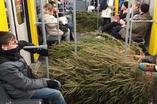 È iniziata la caccia agli abeti per i Cippi di Sant'Antonio: trasportati perfino in metro