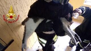Due incendi in poche ore a Montoro (Avellino). I vigili del fuoco rianimano un gatto intossicato