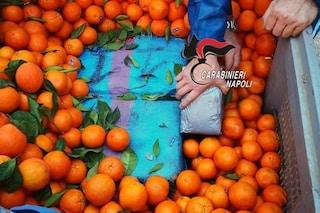 Pozzuoli, sequestrati oltre mille chili di droga nascosti tra cipolle e arance