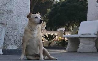 La storia di Nicoletta, il cane che a Ischia veglia da 10 anni la tomba del padrone