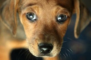 Orrore a Sala Consilina, cane preso a fucilate: è il secondo episodio