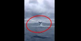 Una balena a Napoli, che spettacolo al largo della Gaiola