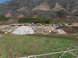 Bracigliano, pecore allevate in una discarica abusiva di rifiuti speciali