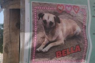 Napoli, la storia di Bella, cane di quartiere che vive in piazza Garibaldi