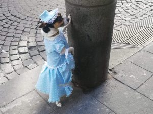 Il cane vestito da principessa su Via Toledo. [Foto / Fanpage.it]
