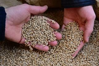 Benevento, topi e piccioni morti in un deposito di grano: sequestrati 45mila quintali