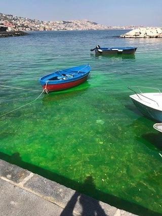Riva Fiorita a Posillipo, il mare diventa color verde fluorescente. Ma c'è un motivo