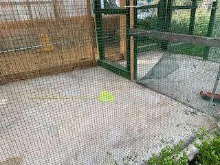 Ladri senza cuore a Ercolano: rubati canarini accuditi da ragazzini disabili