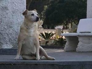 A Ischia una statua per Nicoletta, il cane che per 10 anni ha vegliato la tomba del padrone