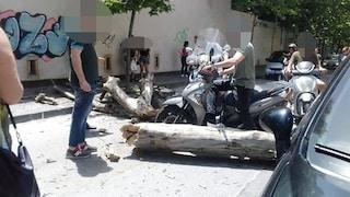 Vomero, cade un albero in via Cimarosa, tragedia sfiorata