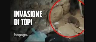 Via Filippo Maria Briganti, invasione di topi sotto il ponte dell'ex Alifana
