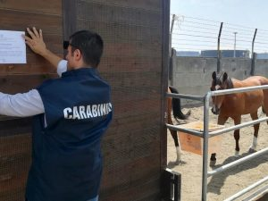 Box abusivi utilizzati come scuderie per i cavalli: in foto, i carabinieri mentre pongono i sigilli di sequestro alla struttura.