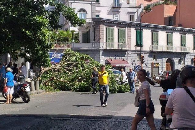 L'albero caduto in piazza Mazzini (Foto di Michele Frasca via Facebook)