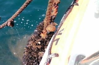 Napoli, maxi sequestro di cozze all'ingresso del porto vicino Santa Lucia: 200 tonnellate