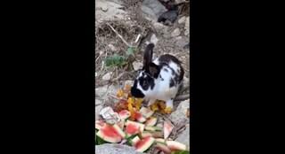 Orrore a Ischia, sbarcano dallo yacht e uccidono un coniglio a sassate: la denuncia del sindaco