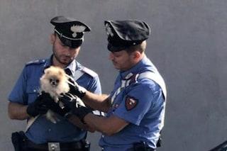 Ruba un cagnolino e lo nasconde nella borsa: arrestata una 39enne a Giugliano