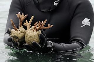 Così ladri di corallo hanno distrutto Costiera Sorrentina e Amalfitana. Danni per mezzo secolo