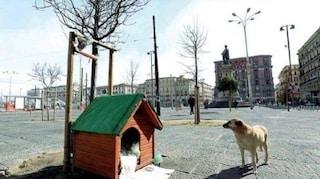 Una cuccia nuova per Bella, cane che vive a piazza Garibaldi: l'altra era stata distrutta