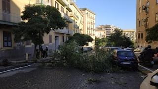 Vomero, cade un albero in via Santacroce: traffico in tilt