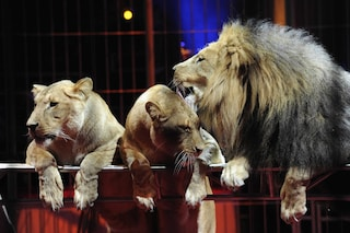 In Campania il circo sarà senza animali: la Regione dice sì. Consentiti solo clown e acrobati