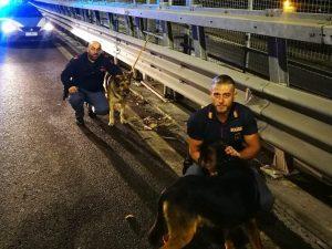 I cani salvati dagli agenti della Questura di Napoli sulla Perimetrale di Scampia.