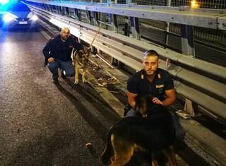 Cani abbandonati e legati al guardrail sulla Perimetrale di Scampia: salvati dalla polizia