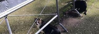 Gatti uccisi a Villa Floridiana: vittime di tiro al bersaglio con le pietre