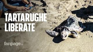 Tartarughe marine salvate dal Centro Dohrn liberate in mare ad Ascea Marina