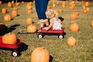 A Caserta il giardino delle zucche, la tradizione americana di Halloween