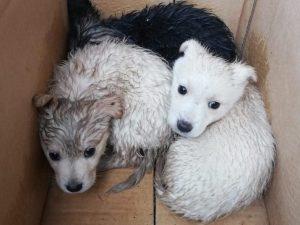 I cagnolini salvati da un netturbino a Benevento.