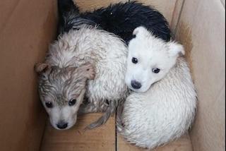 Benevento, salvati tre cuccioli di cane chiusi in un sacco della spazzatura e abbandonati