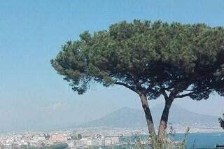 De Magistris vuole piantare tre milioni di alberi a Napoli e provincia