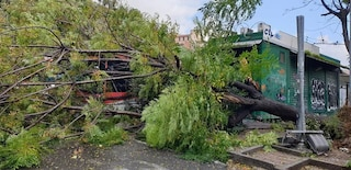 Allerta meteo, a Pozzuoli un albero si abbatte su un autobus: salvo l'autista