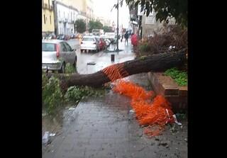 Allerta meteo a Napoli, grosso albero si abbatte sulla strada a Secondigliano