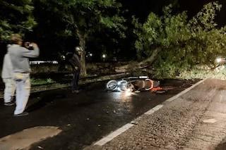 Allerta meteo Napoli, albero si abbatte su uno scooter in corsa: nessun ferito