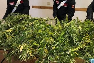 Torre del Greco: in scooter con 15 chili di cannabis, arrestato dopo inseguimento