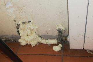 San Giovanni a Teduccio: scuola invasa dai topi, studenti in rivolta