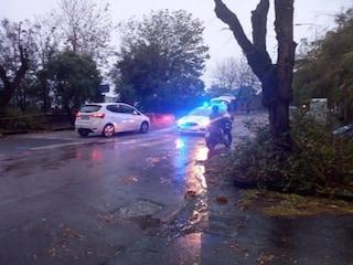 Maltempo a Napoli, rischio crollo alberi: chiuso un tratto di via Petrarca