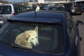 Cane rinchiuso in auto per ore rischia la morte, i vigili sfondano il finestrino lo salvano