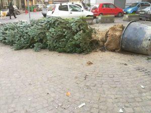 L'albero dopo il tentato furto del 17 dicembre