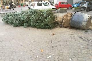 Forcella, hanno tentato di nuovo di rubare l'albero di Natale