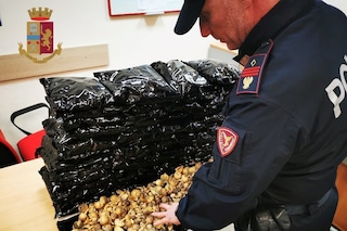 Napoli, 6 chili di papaveri da oppio nel bagaglio, arrestato corriere della droga