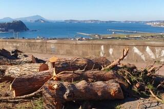 La Reggia di Caserta ridà vita agli alberi abbattuti dal maltempo. Perché Napoli non ci ha pensato?