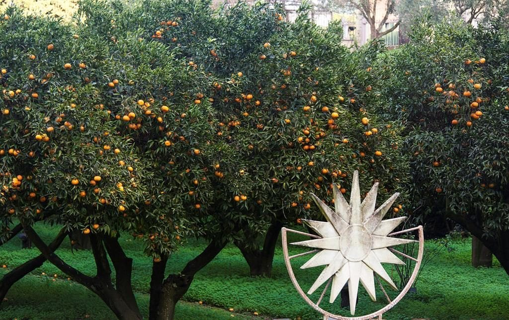 Alberi di mandarini ai Campi Flegrei.