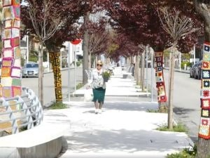 Il viale degli alberi ricamati [Foto da Tele Speranza]