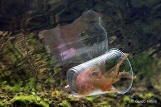 La medusa intrappolata nel bicchiere di plastica nel mare di Bacoli: ecco il killer trasparente