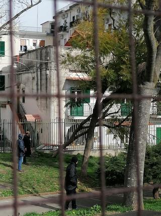 Maltempo Napoli, oggi scuole aperte ma crolla un albero all'Istituto Lodoletta di Capodimonte