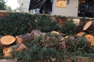 Viale dei Pini addio: abbattuto l'ultimo albero ai Colli Aminei